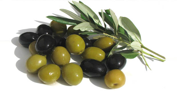 Olives are one of Palestine's primary crops